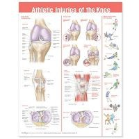Anatomical Chart #0781786754